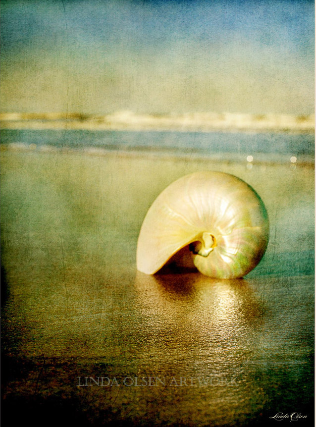 shell-in-sand