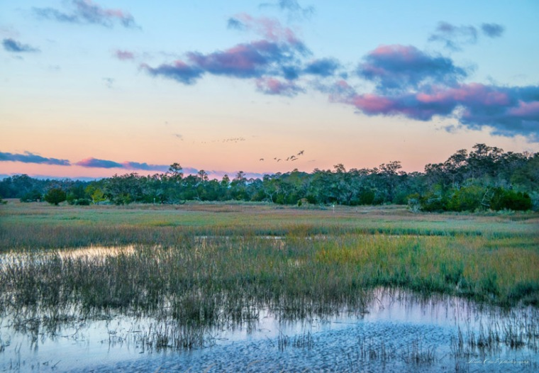 There is something very special about the southern landscape. SO serene looking at the marsh and rivers that flow throughout the region. In small towns, there are only a couple resturants and the food was down home GREAT. Laura's house backs up against a wildlife refuge near Harris Neck. Much of the forest was cut down to get rid of a beetle that has infested the region. Last May, when I visited, there was a line of pine forest at the edge of their property. This time all the trees were gone and we had a more expansive view. I created these images and tinted them a bit when I returned. The panos were made from 3-5 photos that I stitched.