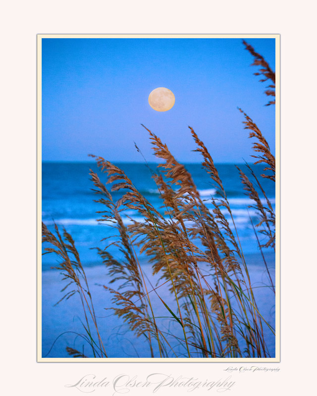 moon-and-seaoats-pt