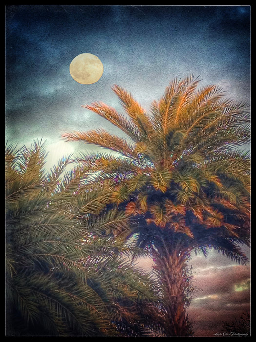 moon-with-palms