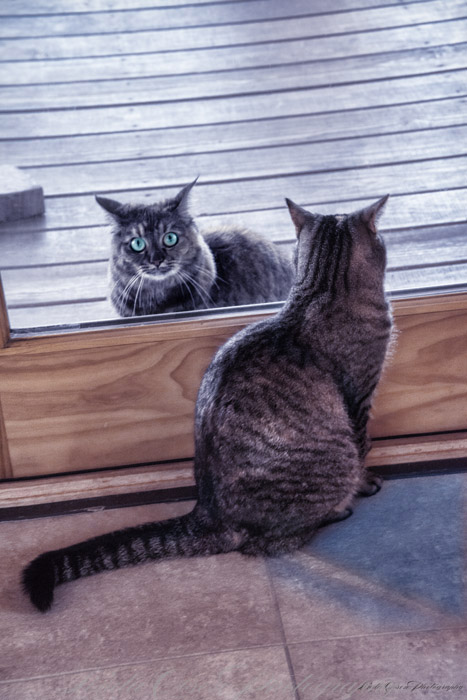 two-cats
