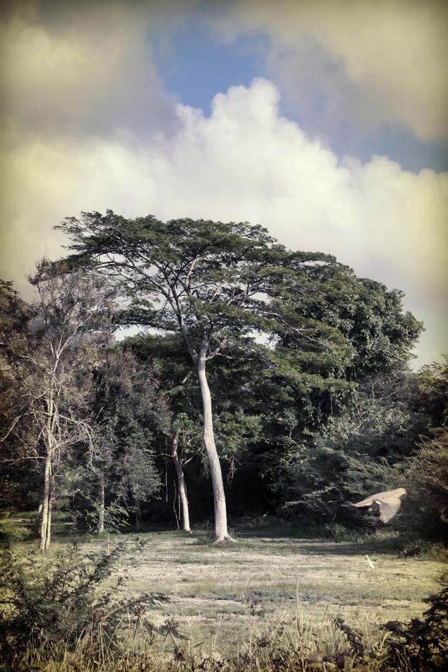 a-tall-tree