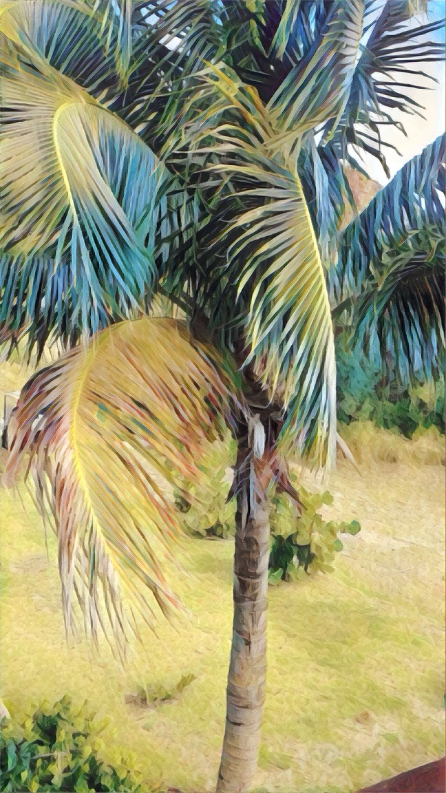 palm-painted